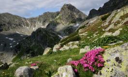 Războiul ariilor protejate: Organizaţiile de mediu vor să sesizeze Curtea Constituţională