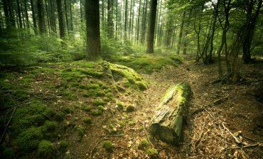 Grupul austriac Schweighofer vinde pădurile pe care le are în România către investitorul suedez Greengold