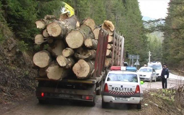 Percheziţii ale DIICOT la sediul societăţii Schweighofer Holzindustrie într-un dosar care vizează un prejudiciu de 25 milioane de euro